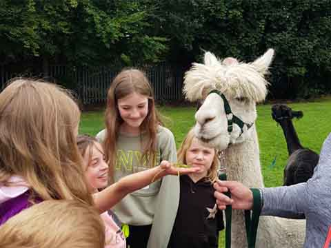 Kids getting close to the animals and loving our holiday camp in Leeds.